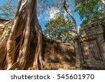 tall tree growth on ruin | Shutterstock . vector #545601970