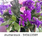 group of violet flowers and... | Shutterstock . vector #545613589
