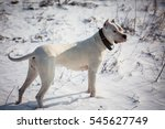 dog in the snow | Shutterstock . vector #545627749