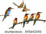 set of colored birds in...