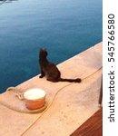 Croatian Black Cat On Pier