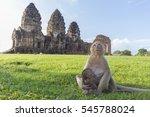 Monkey Mom Hold Baby Monkey Si...