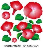 morning glory flowers in red... | Shutterstock .eps vector #545853964