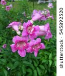 Small photo of Pink flower with green leat