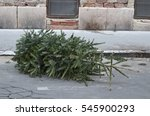 Abandoned Christmas Tree On Th...