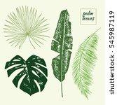 palm tree leaves set | Shutterstock .eps vector #545987119