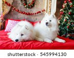 two samoyed dog in the red bed... | Shutterstock . vector #545994130