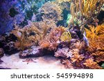 coral reef colourfull fishes... | Shutterstock . vector #545994898