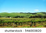 Grape Vineyard With Blue Sky....