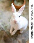 Stock photo white rabbit 546023746