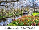 keukenhof park of flowers and... | Shutterstock . vector #546097633