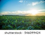 soybean plantation | Shutterstock . vector #546099424