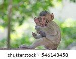cute monkeys a cute monkey... | Shutterstock . vector #546143458