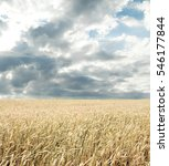 wheat field and blue sky with... | Shutterstock . vector #546177844