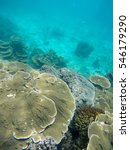 Small photo of Soft focused photo of Ring coral and montipora plate coral at Horse shoes island ,Andaman ocean,Myanmar,Asia