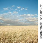 wheat field and blue sky with... | Shutterstock . vector #546184279