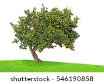 orange tree on white background | Shutterstock . vector #546190858