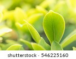 close up nature view of green... | Shutterstock . vector #546225160