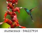 green hermit  phaethornis guy ... | Shutterstock . vector #546227914