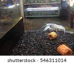 white crayfish in aquarium | Shutterstock . vector #546311014