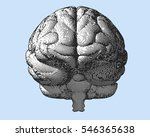 black and white engraving brain ... | Shutterstock .eps vector #546365638
