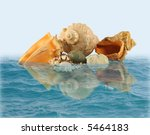 Sea Shells And Stones In Water