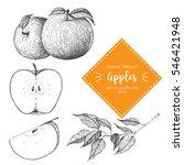 apple vector illustration. hand ... | Shutterstock .eps vector #546421948