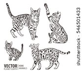 cats collection   vector... | Shutterstock .eps vector #546501433