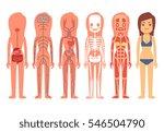 medical woman body anatomy... | Shutterstock .eps vector #546504790