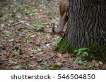 Squirrel Goes Down On The Trun...
