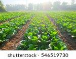 Organic Vegetable Garden Futur...
