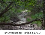 Fallen Tree Branch Across A Dr...