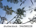 blue sky with tree leaf | Shutterstock . vector #546580228