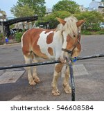 Curious Light Brown Horse With...