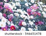 flower garden flower bouquets...   Shutterstock . vector #546651478