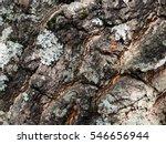 Close Up Shot Of Tree Bark....