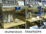 experimental laboratory mice... | Shutterstock . vector #546696094