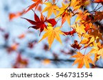 red maple leaves | Shutterstock . vector #546731554