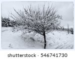 snow and tree | Shutterstock . vector #546741730