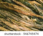 dried raw tobacco leaves.... | Shutterstock . vector #546745474