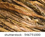 golden tobacco leaves. golden... | Shutterstock . vector #546751000