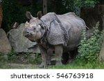 indian rhinoceros  rhinoceros... | Shutterstock . vector #546763918