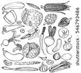 hand drawn ink sketch. set of... | Shutterstock . vector #546793486