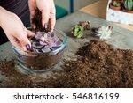 Florist Creates Florarium With...