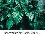tropical green leaf texture... | Shutterstock . vector #546830710