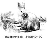 Stock vector a white hare on snow with fir tree branches and cones vector sketch black and white 546840490