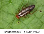 cockroaches from the equatorial ... | Shutterstock . vector #546844960