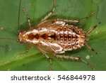 cockroaches from the equatorial ... | Shutterstock . vector #546844978