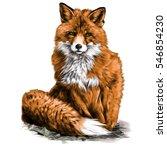 red fox vector illustration... | Shutterstock .eps vector #546854230