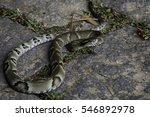brazilian fauna and nature | Shutterstock . vector #546892978